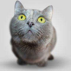 "[Test] Le ""gambe dei Gatti"""